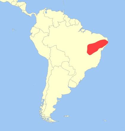 Image of Brazilian Three-banded Armadillo