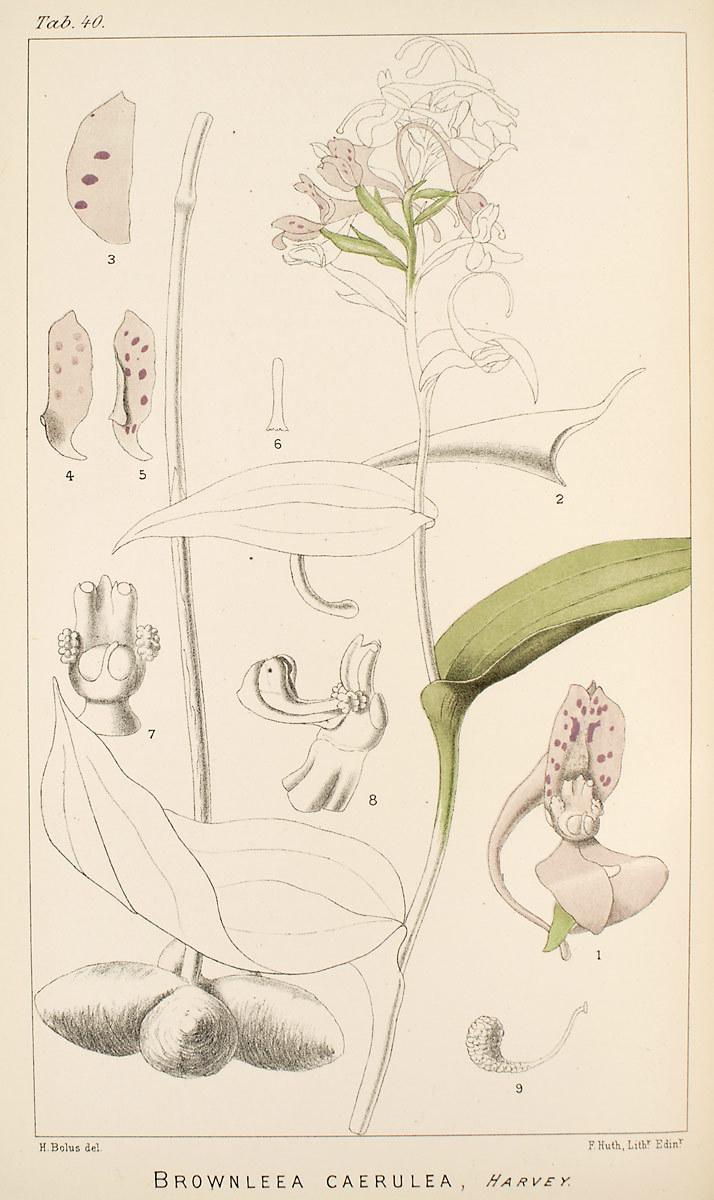 Image of Brownleea