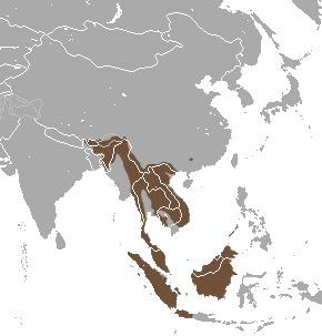 Image of Binturong