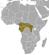 Image of Black-legged mongoose