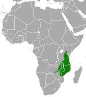 Image of Bushy-tailed Mongoose