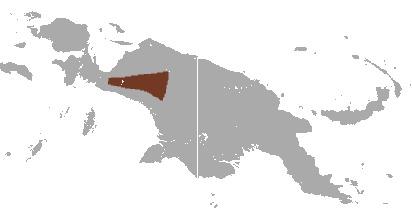 Image of Weyland Ringtail Possum