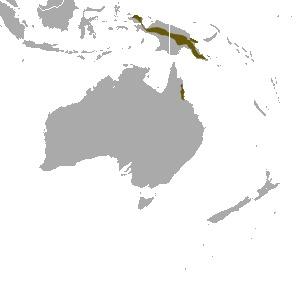 Image of pygmy possums