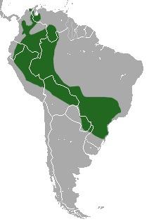 Image of <i>Caluromys</i> (<i>Mallodelphys</i>) <i>lanatus</i> (Olfers 1818)
