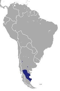 Image of Patagonian Opossum