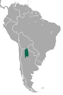 Image of Argentine Fat-tailed Mouse Opossum