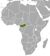 Image of Congo Golden Mole