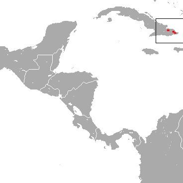 Image of Cuban Solenodon