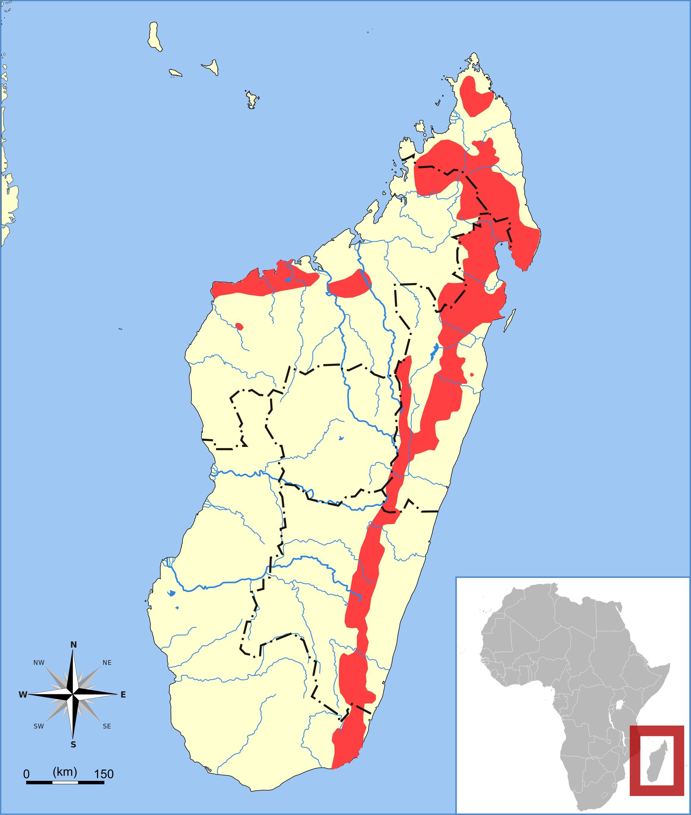 Image of Eastern Falanouc