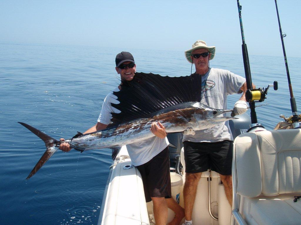 Image of Atlantic sailfish