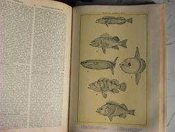 Image of Mola