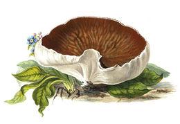 Image of <i>Disciotis venosa</i> (Pers.) Arnould 1893