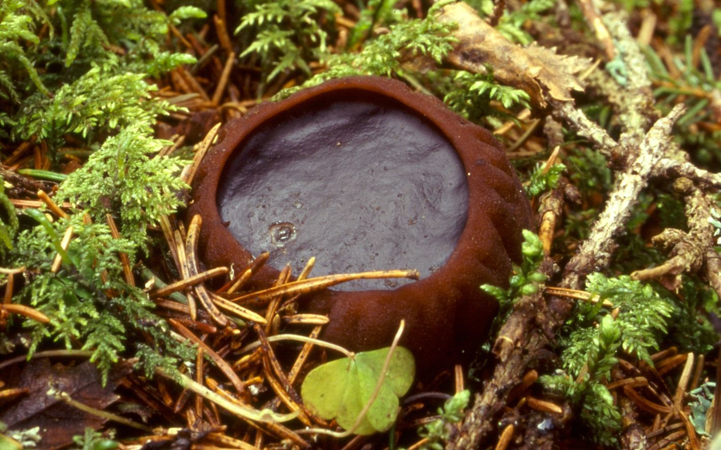 Image of Charred-Pancake Cup
