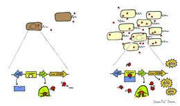صورة بكتيريا الضمة