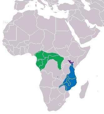Image of Black-legged mongooses