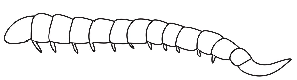 Image of ibaliid wasps