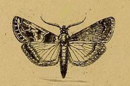 Image of Hypotia