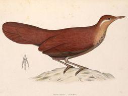 Image of Brown Mesite