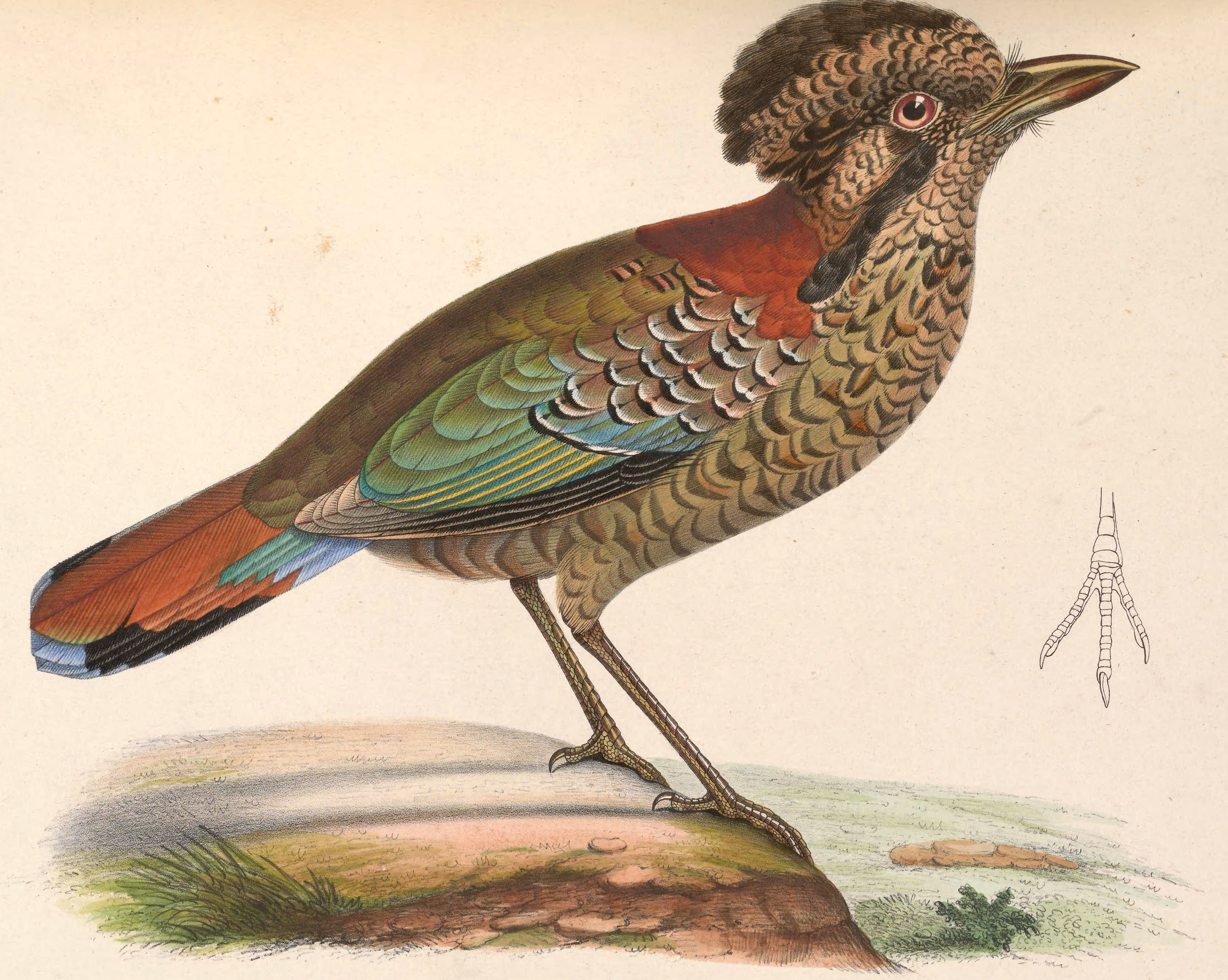 Image of Scaled Ground Roller