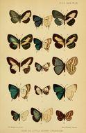 Image of <i>Leptomyrina makala</i> Bethune-Baker 1908