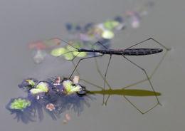 Image of water measurer
