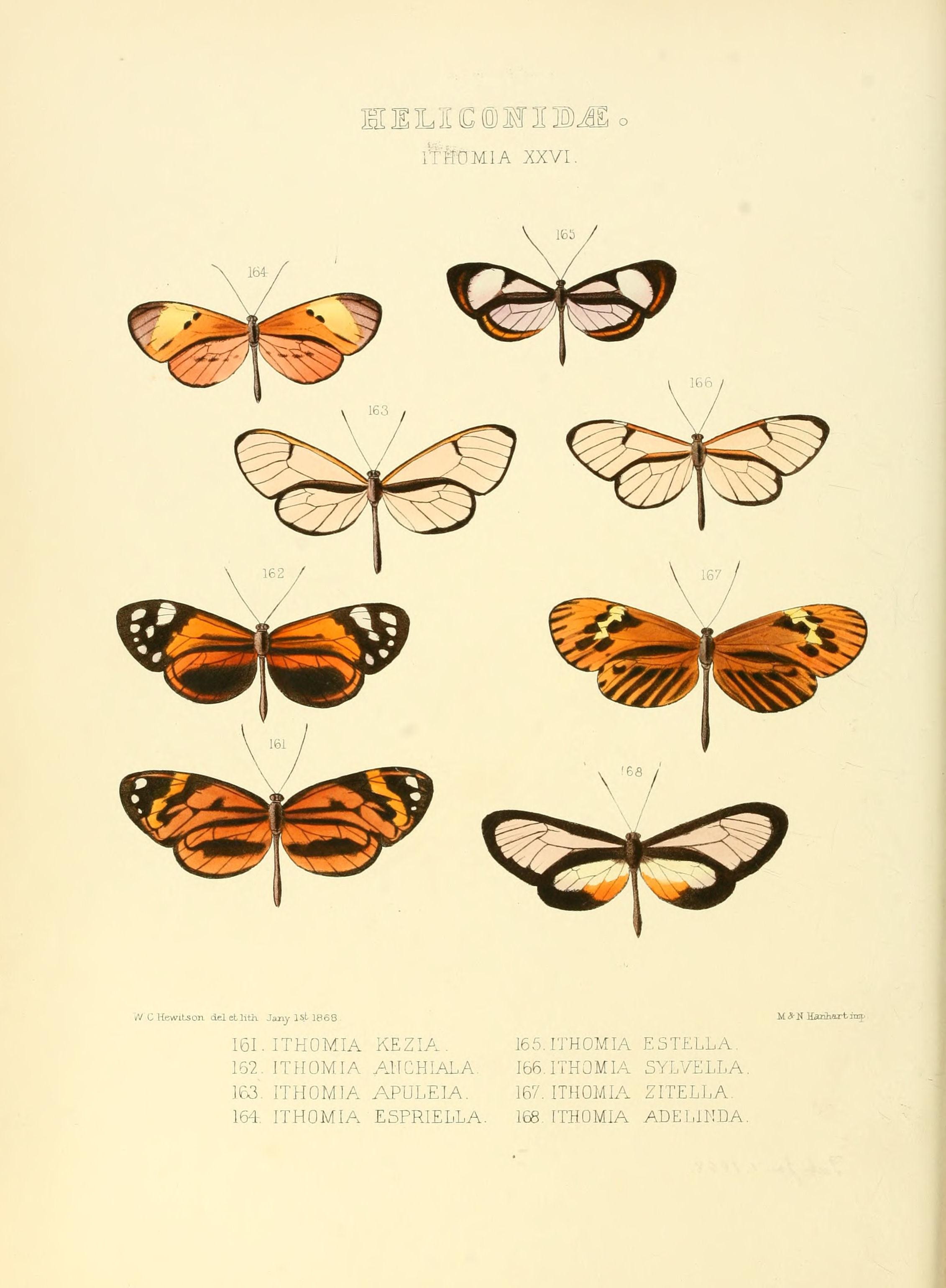 Image of <i>Ceratinia neso</i> Hübner 1806