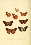 Image of <i>Bibasis vasutana</i> Moore 1865