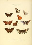 Image of <i>Matapa aria</i> Moore 1865