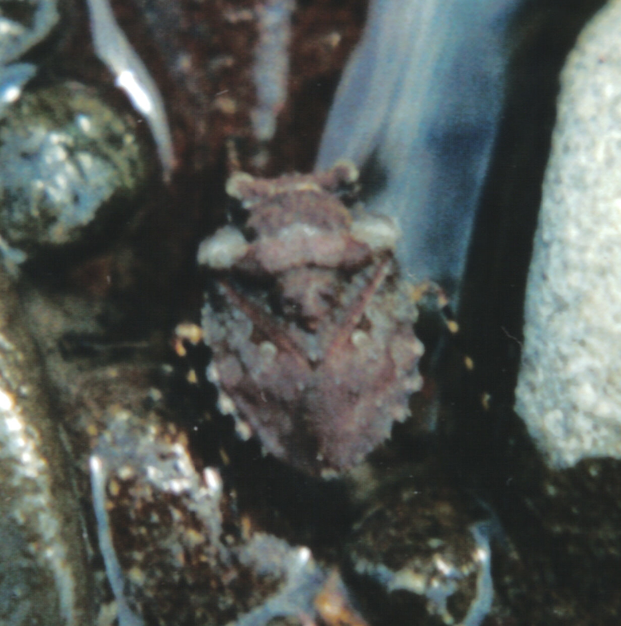 Image of toad bugs