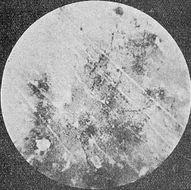 Image of chupalo