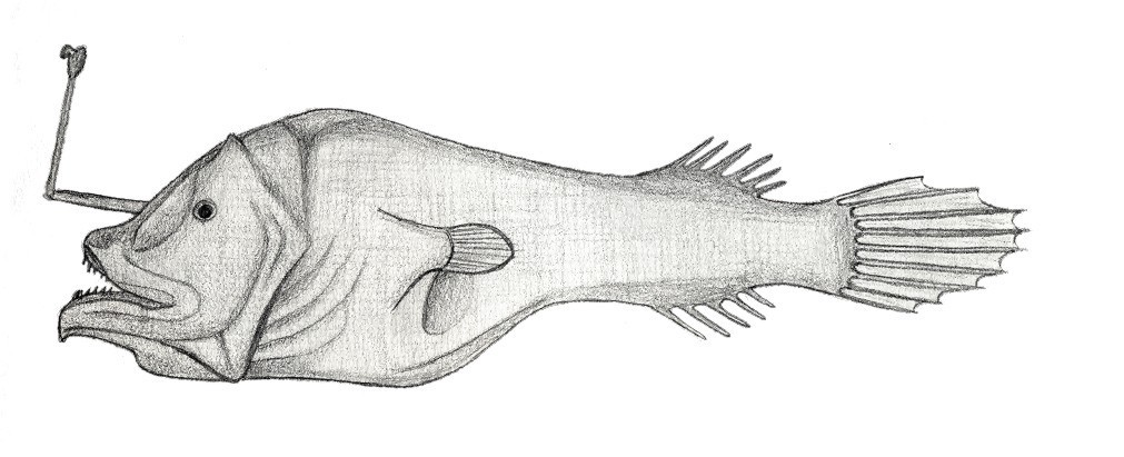 Image of Horned lantern fish