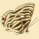 Image of <i>Anthene lychnides</i> (Hewitson 1878)