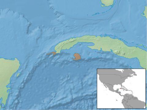 Image of Cuban Greater Funnel-eared Bat