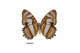 Image of Metamorpha