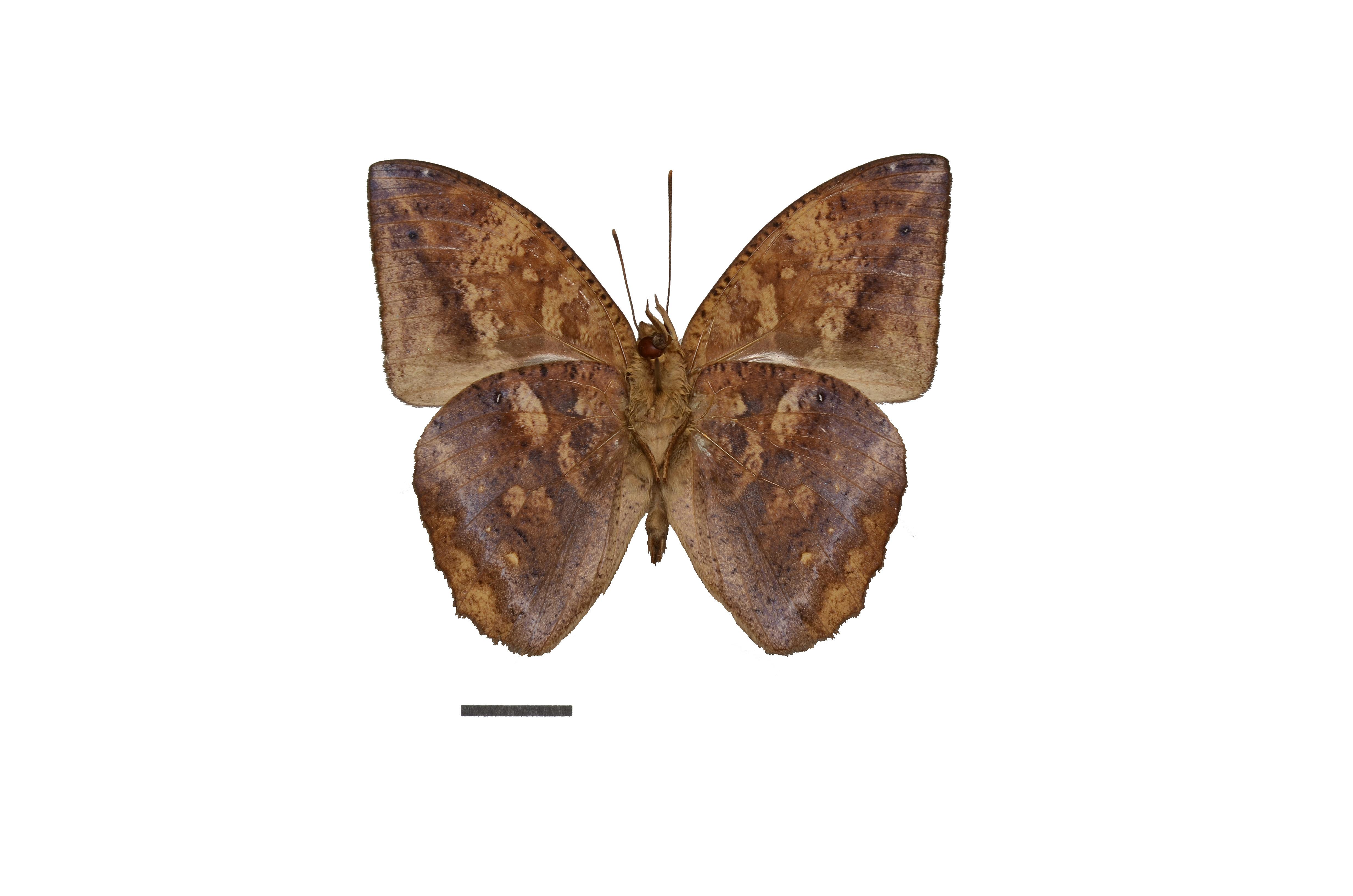 Image of Narope