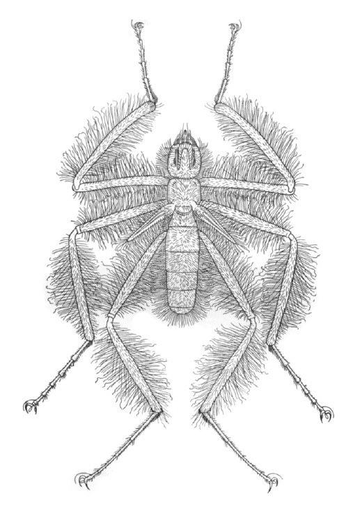 Image of frightful hairy flies