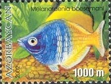 Image of <i>Melanotaenia boesemani</i> Allen & Cross 1980