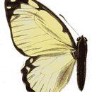 Image of <i>Graphium levassori</i> (Oberthür 1886)