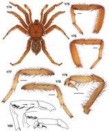 Image of The Barack Obama Trapdoor Spider