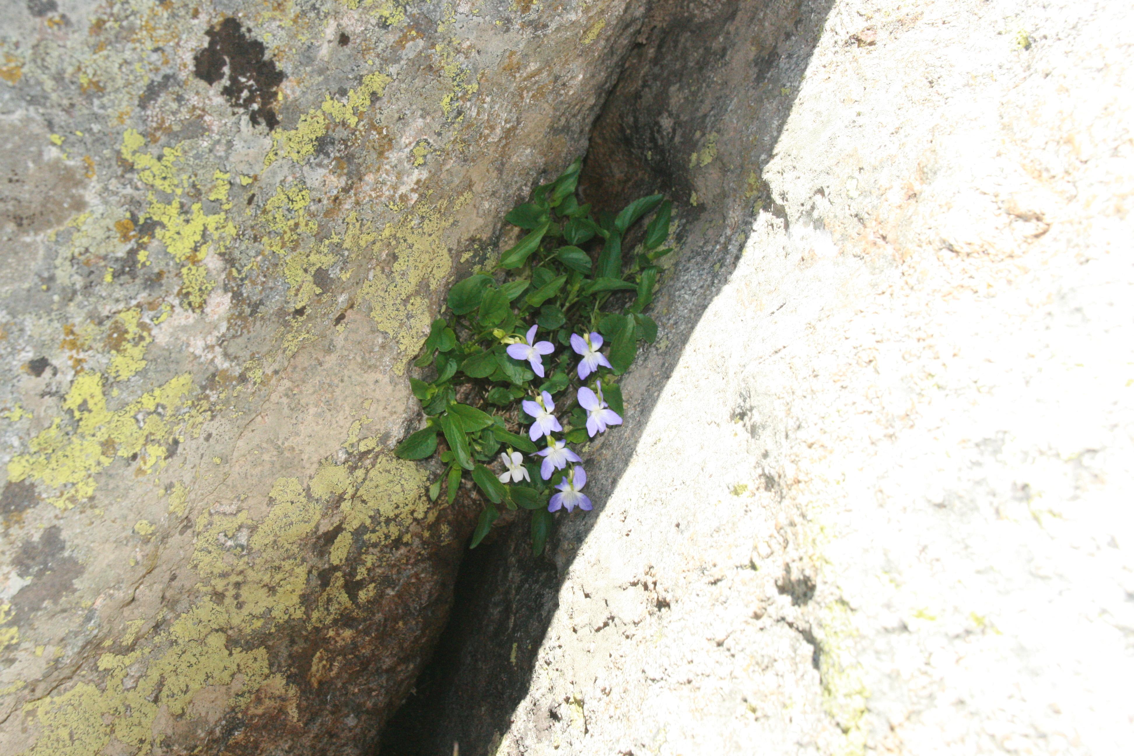 Image of dog violet