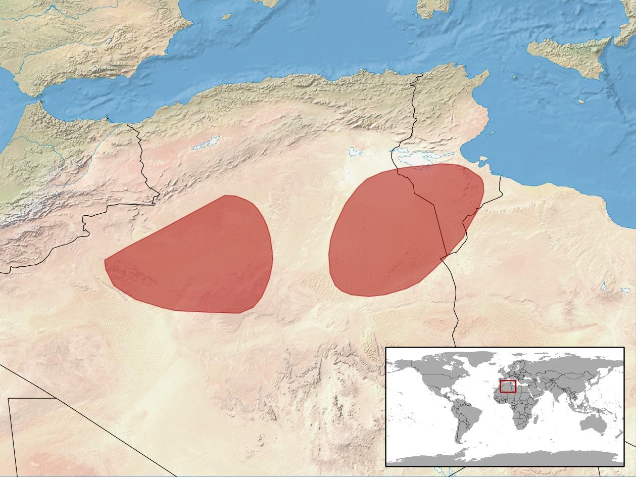 Image of Sahara Agama