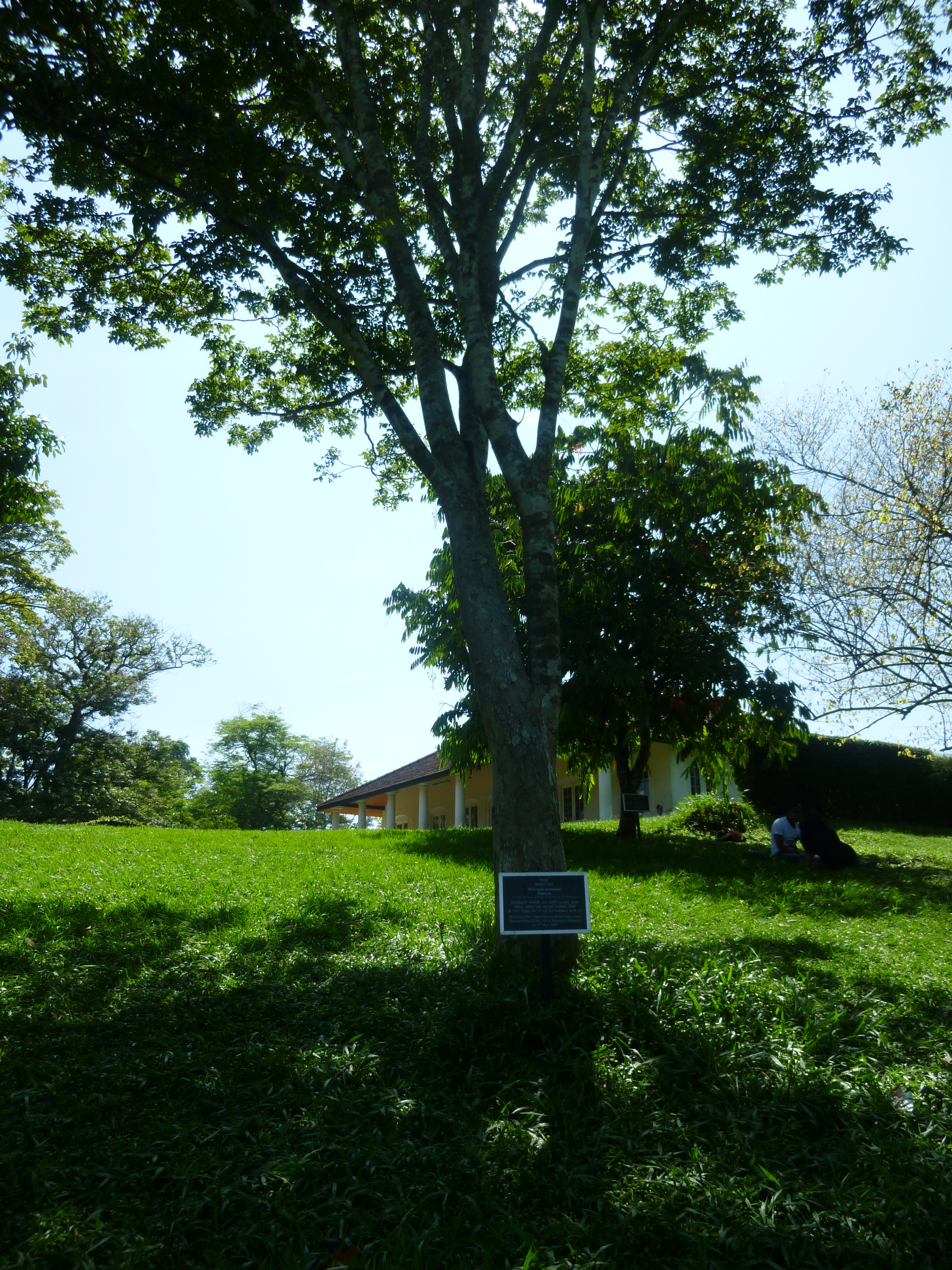 Image of Nandu Wood