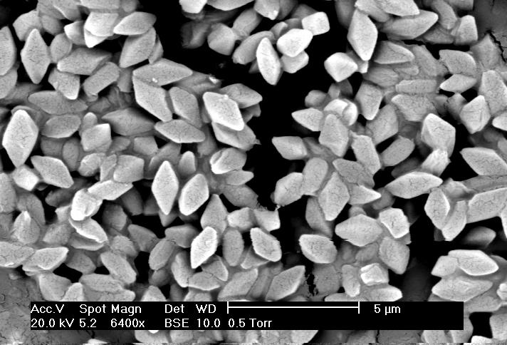 Image of <i>Bacillus thuringiensis</i>