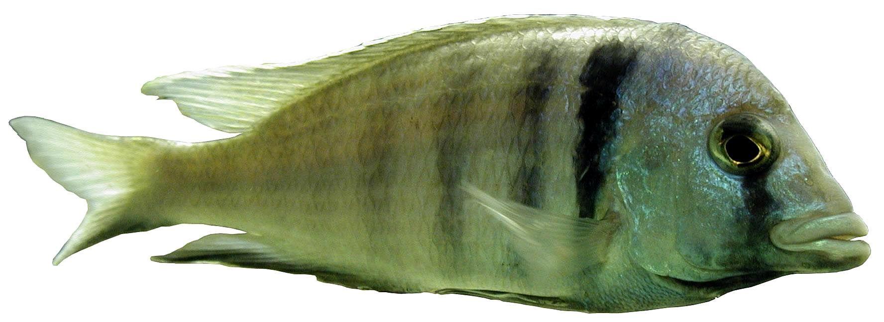 Image of Deep Water Hap