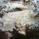 Image of Vararia
