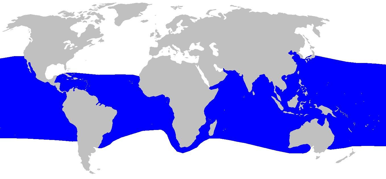 Image of Megamouth Shark