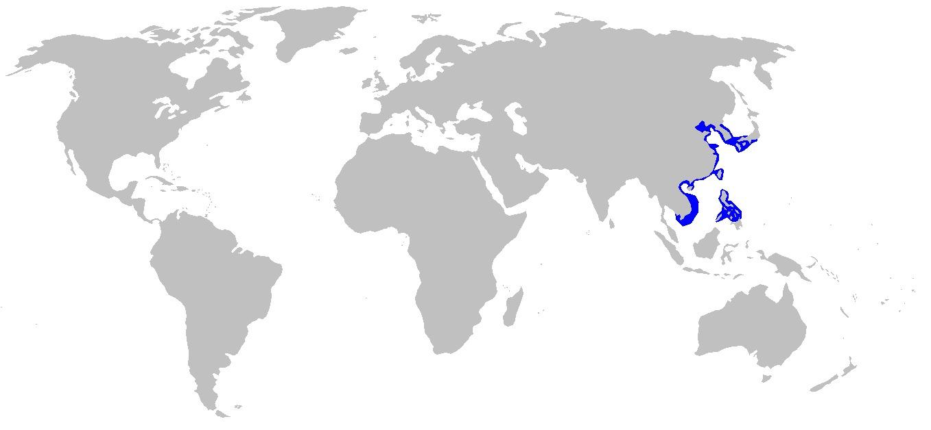 Image of Japanese Wobbegong