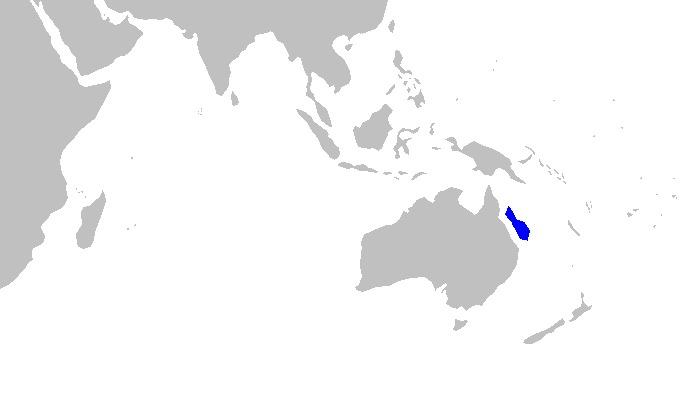 Image of Tropical Sawshark