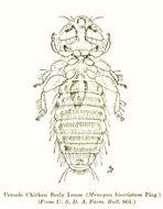 Image of Amblycera
