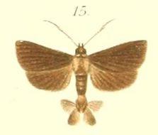 Image of <i>Piletocera atrata</i> Pagenstecher 1900